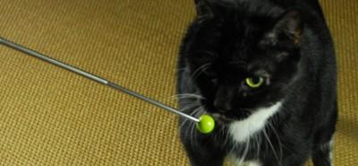 Katze-Nasentarget-Clik-Stik