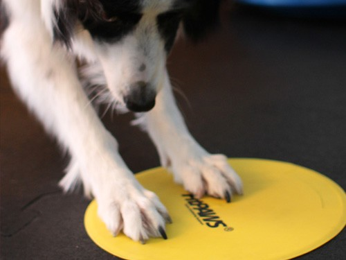 FitPAWS® Targets Hund macht Touch!