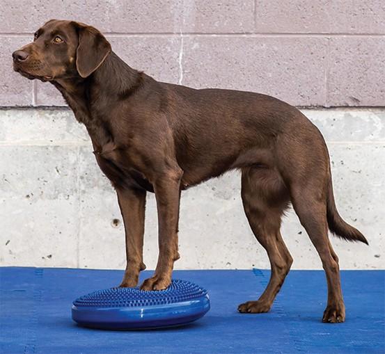 FitPAWS® Balance Disc blau für Hunde